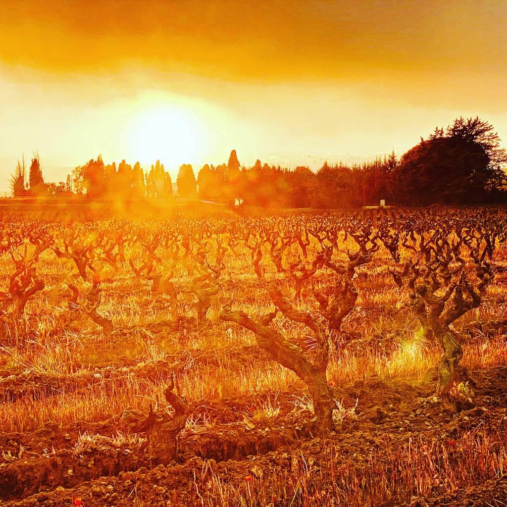 - Sunset in Méhari and tasting