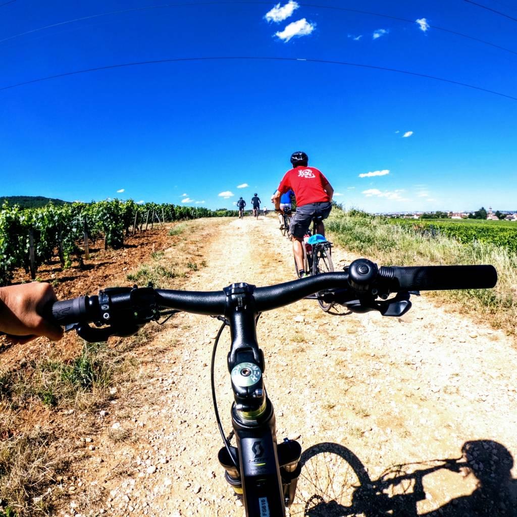 Descoberta dos vinhedos da Borgonha de bicicleta e degustação