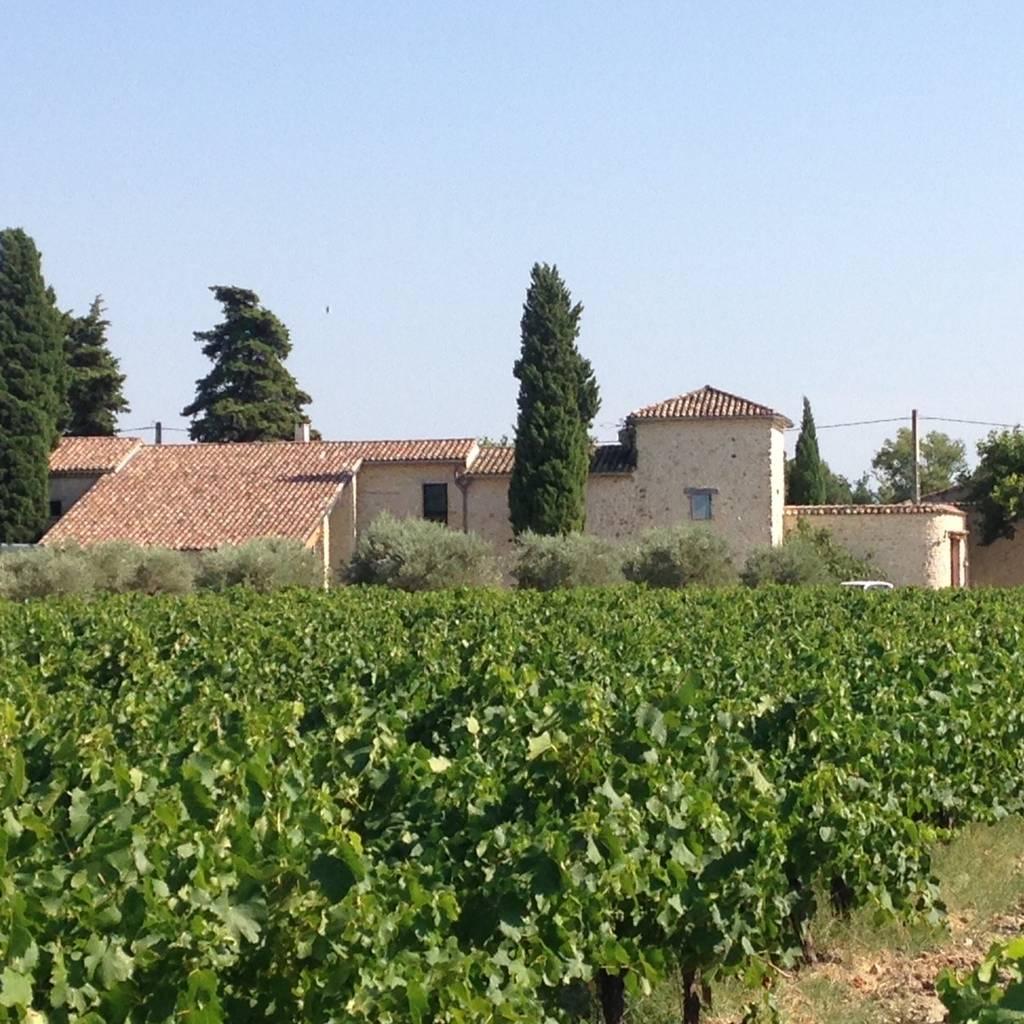 - Balade pédagogique dans les vignes