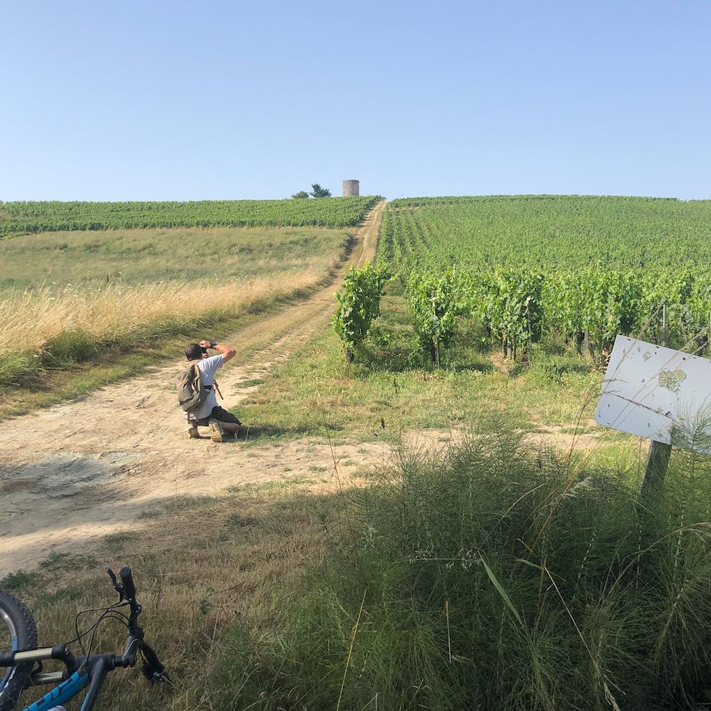 - Visite Guidée du Domaine à Vélo Électrique