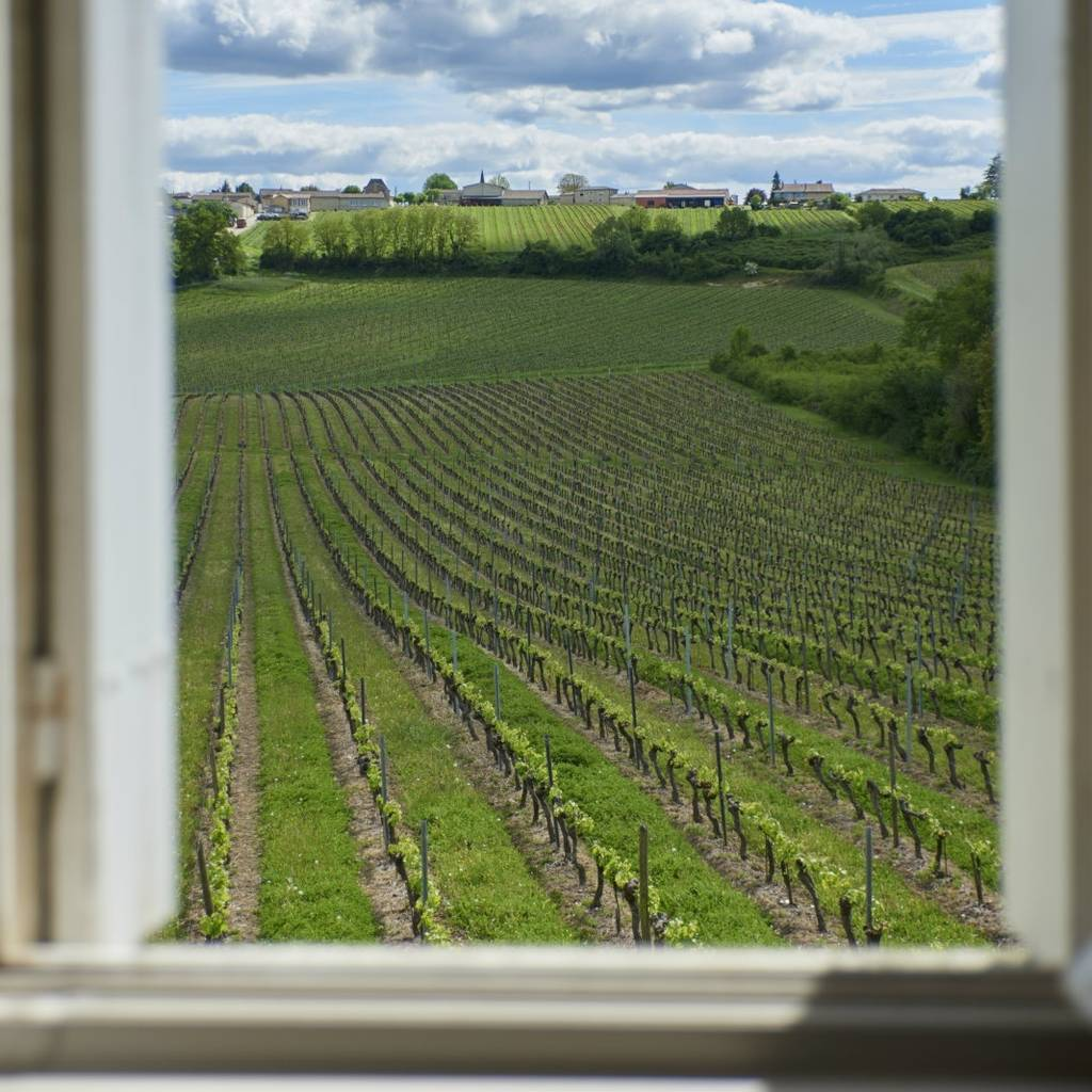 Experience the wine culture