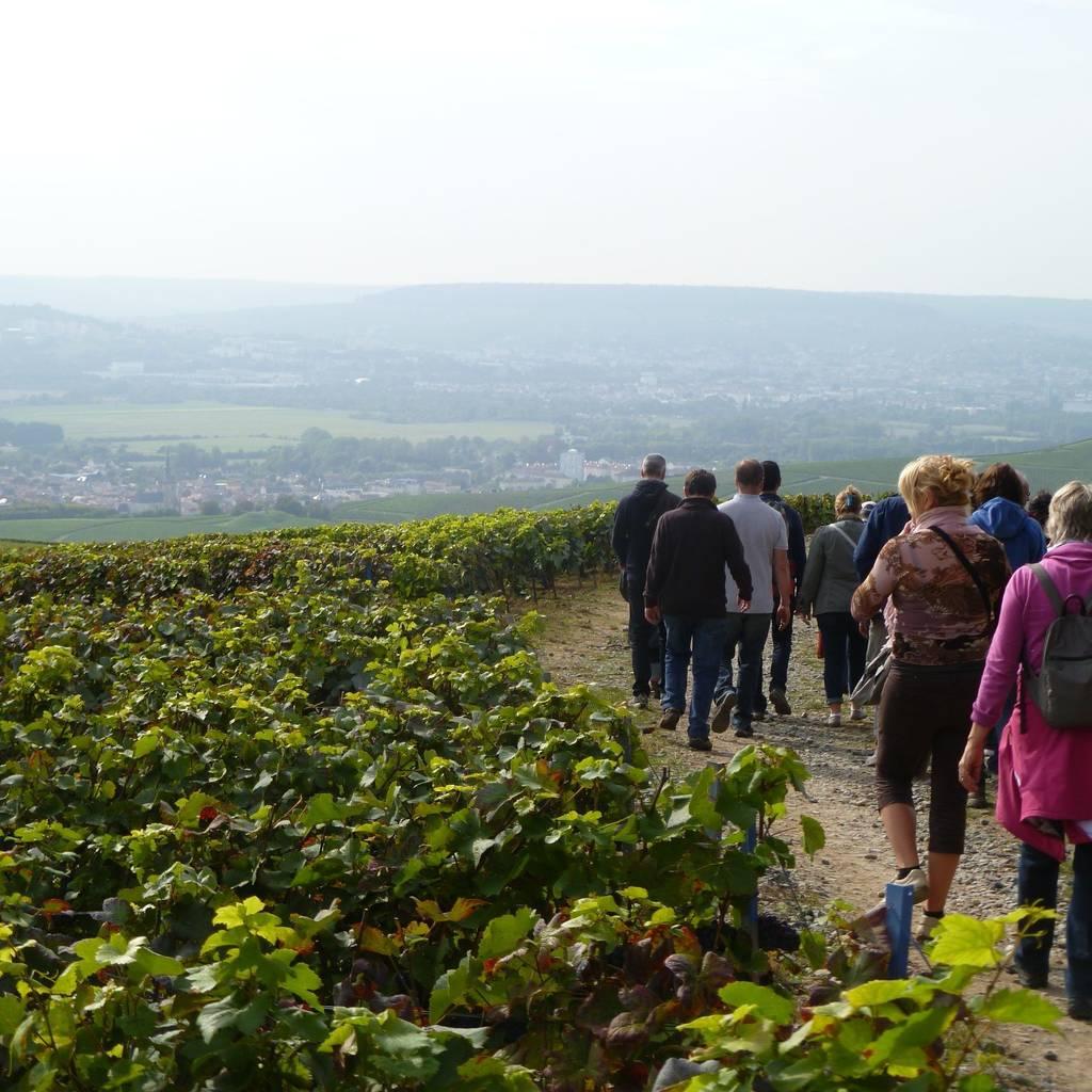 - La visite du sentier du Vigneron