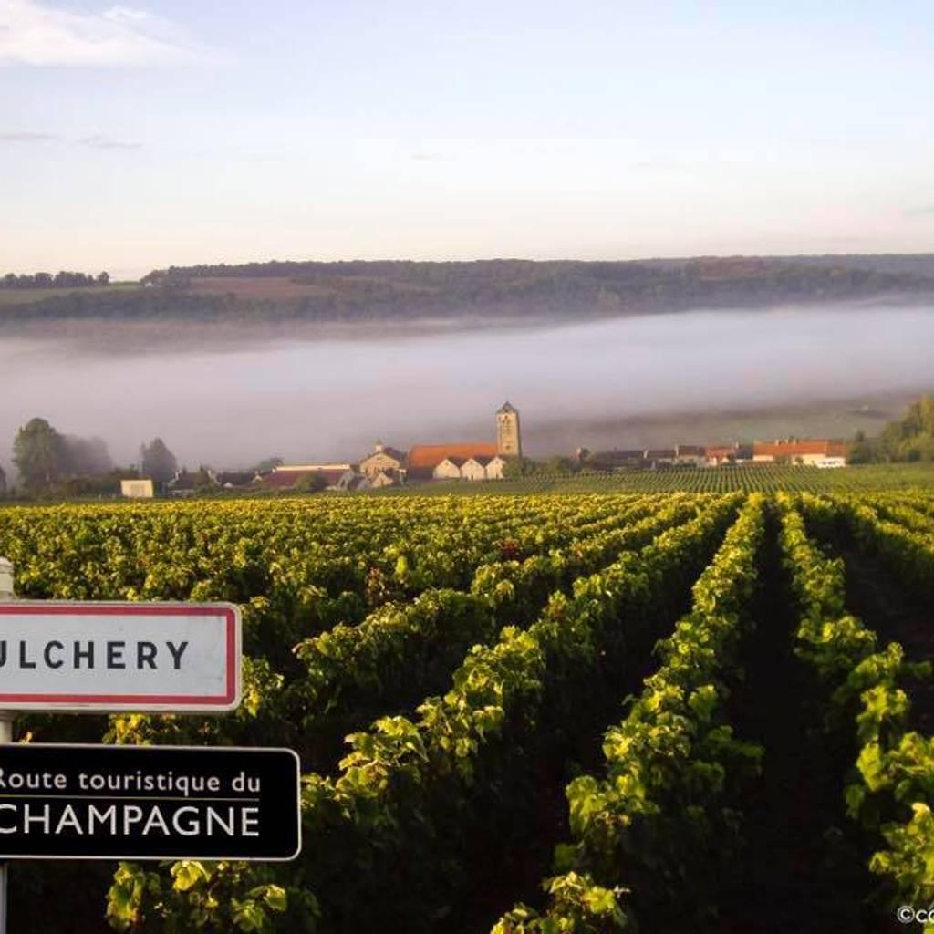 - Visite du vignoble & dégustation de 2 champagnes
