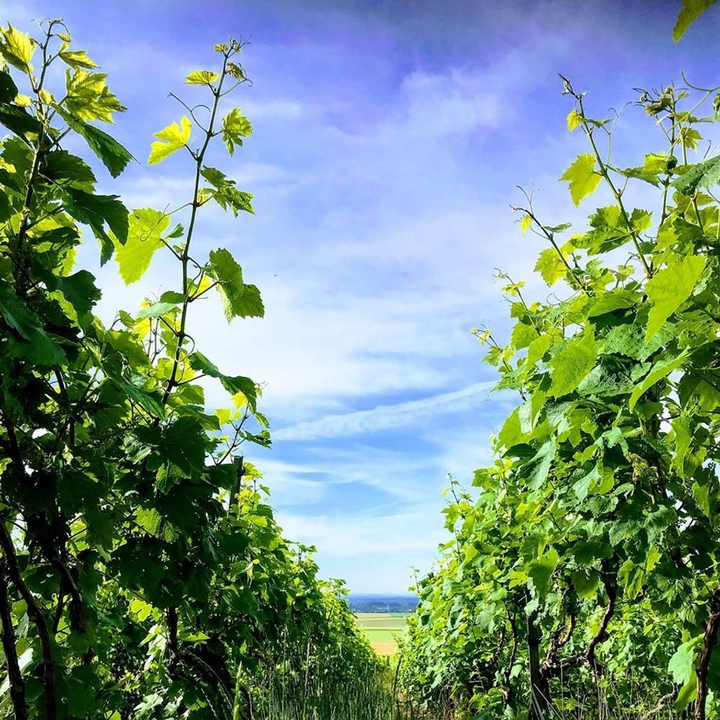 - Balade au coeur de nos Vignes Grand Cru