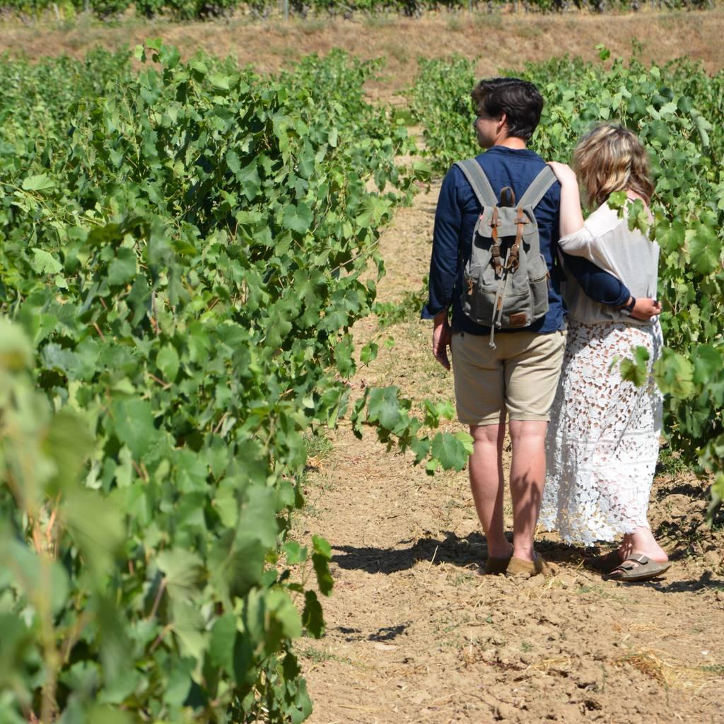 - Vins, Lavandes et Shooting photo