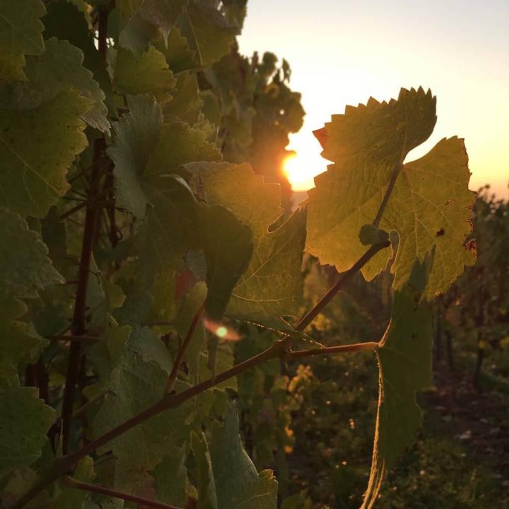 - Paseo en segway por los viñedos y degustación.