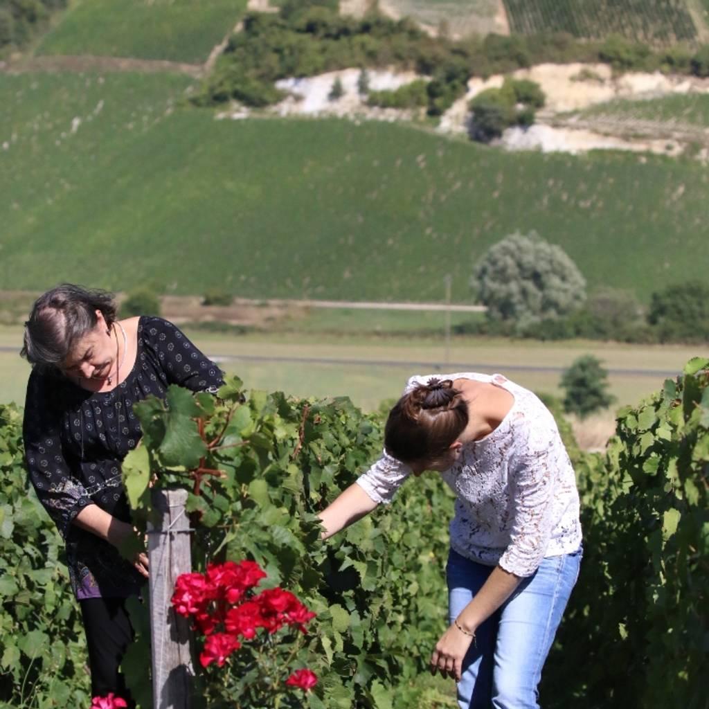 Vineyard picnic and tasting