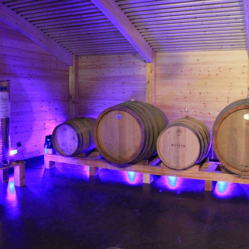Guided visit of the winery and tasting of three wines