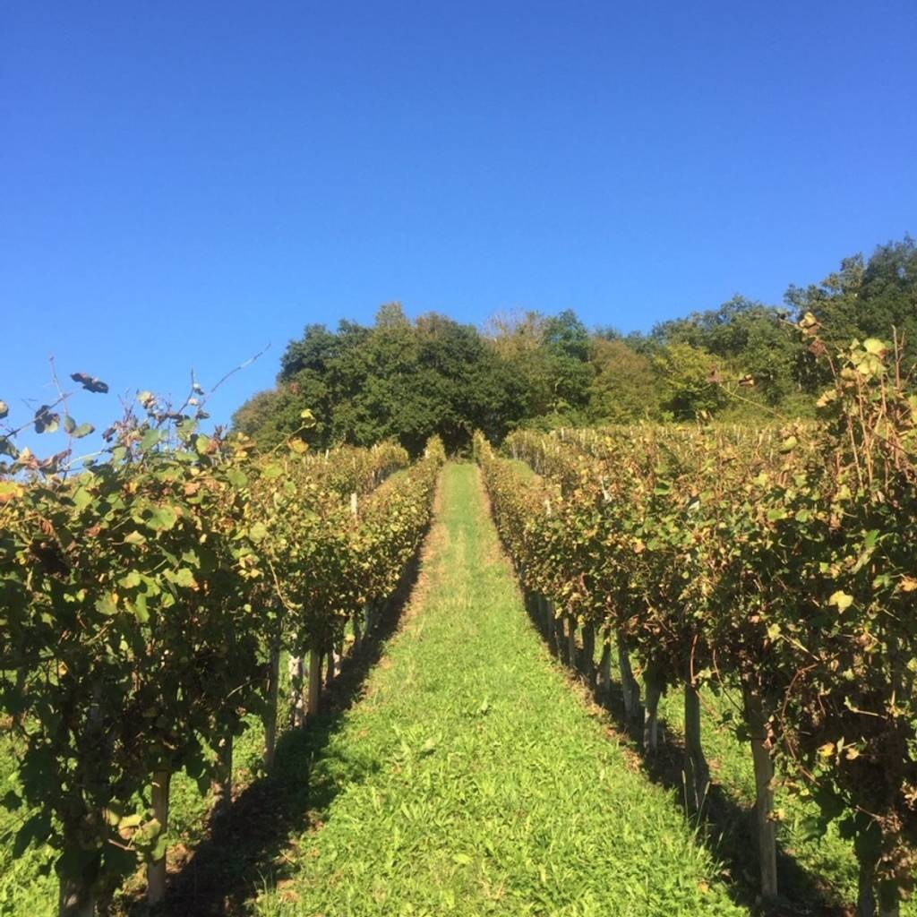 - Guided visit of the winery and tasting of three wines