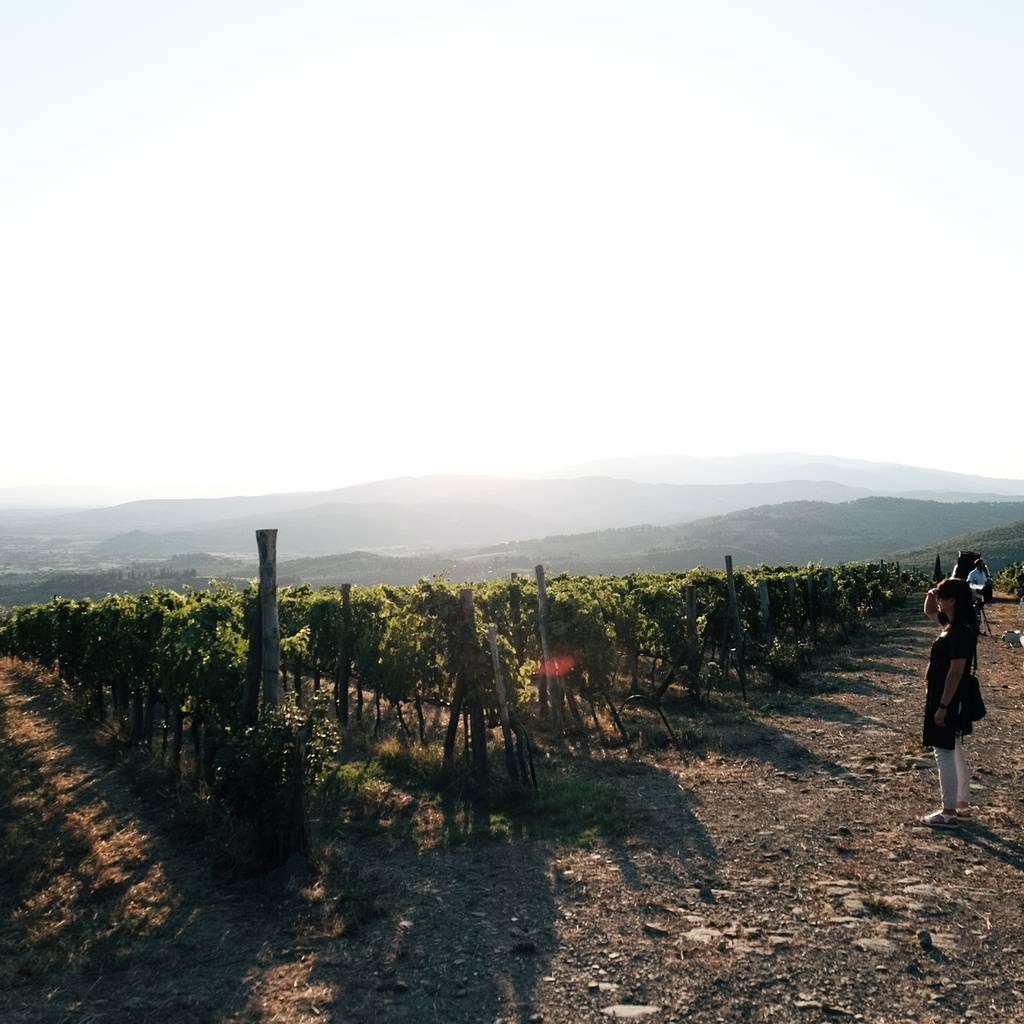 - Wine tour & tasting