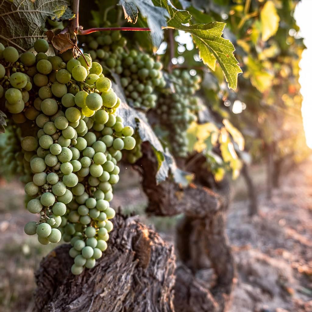- cruzeiro de vinho