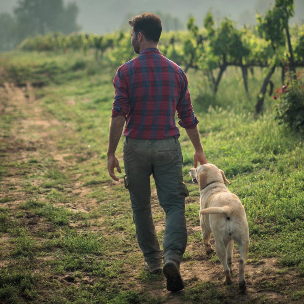 Walk among vineyards and natural wine tasting