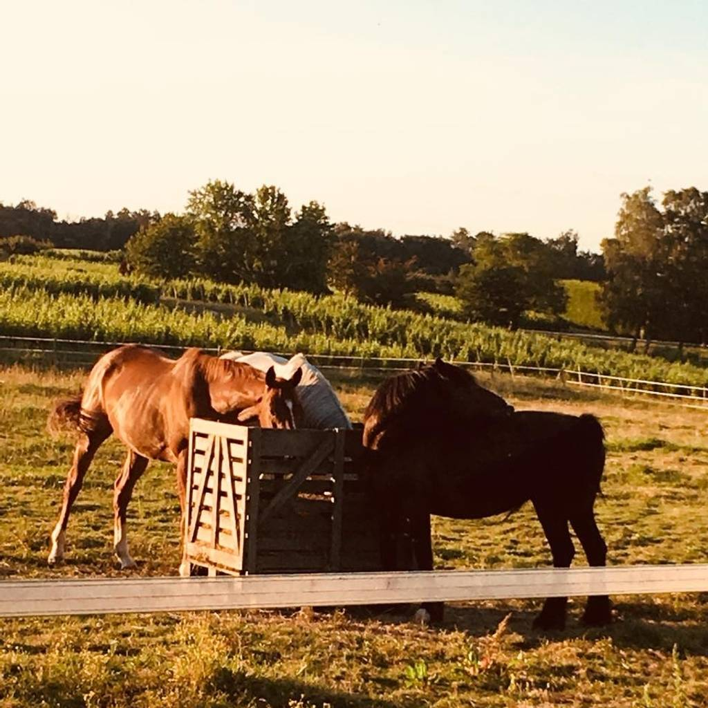 Horseback riding and aperitive (partnership with l'Ecurie des 3 Châteaux)