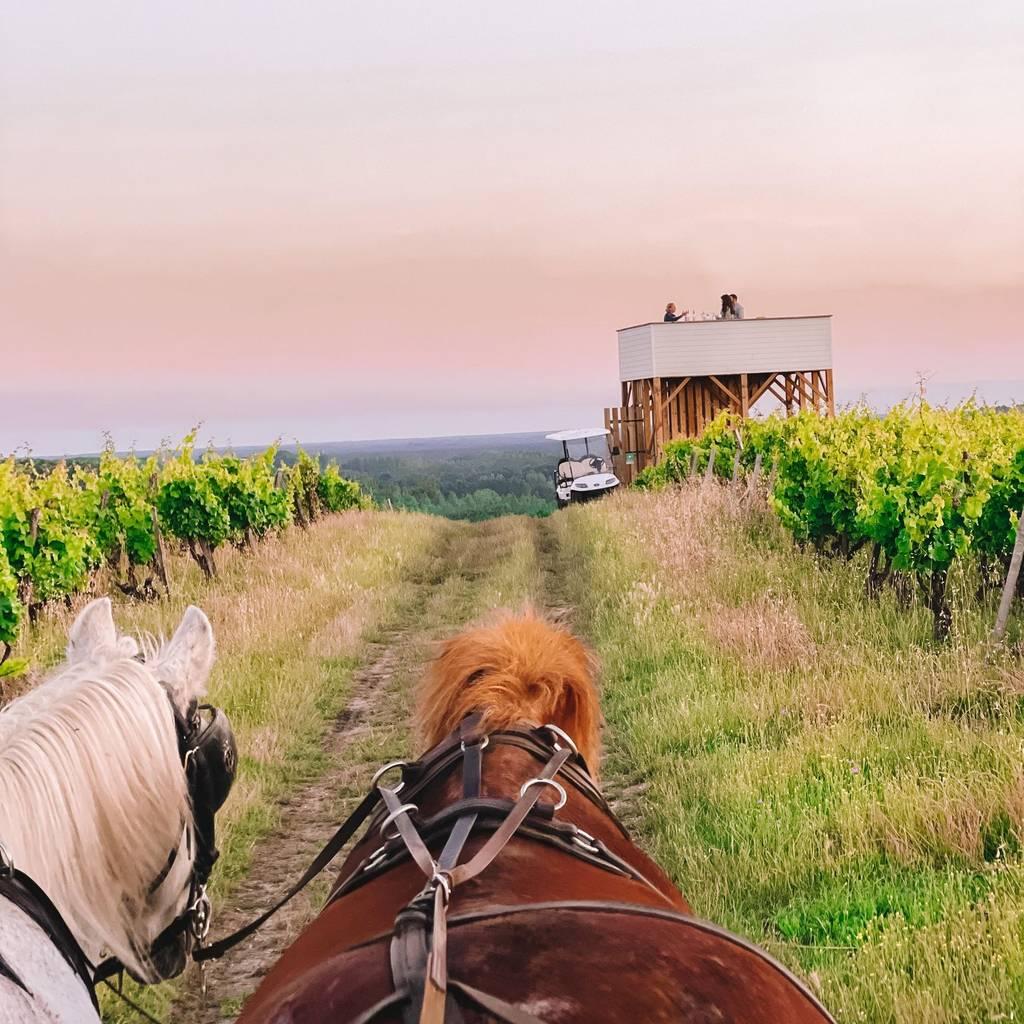 - Carriage ride through Sauternes