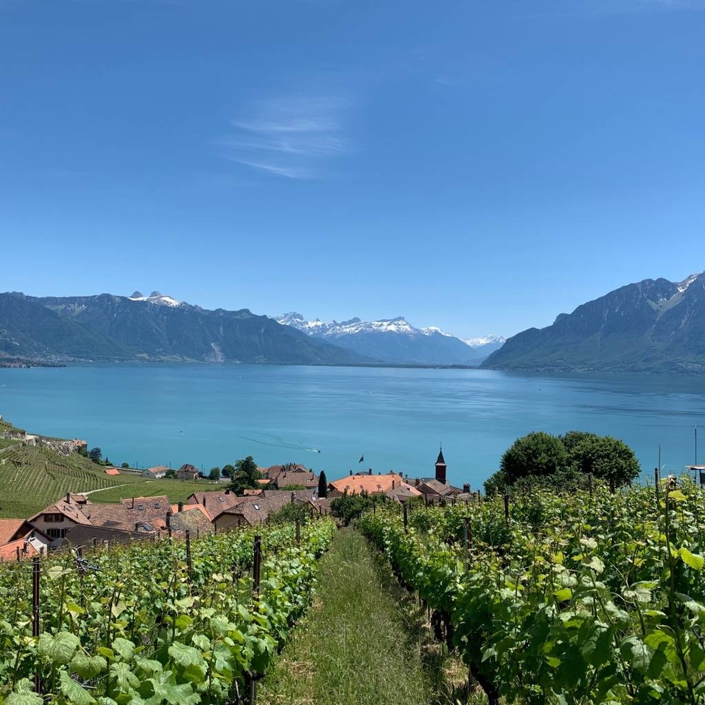 Lavaux Vineyard Terraces - UNESCO Heritage