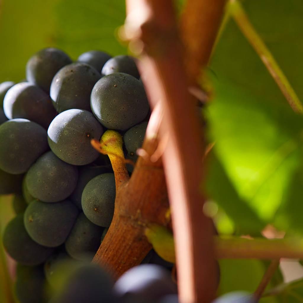 - Gateway in the vineyard
