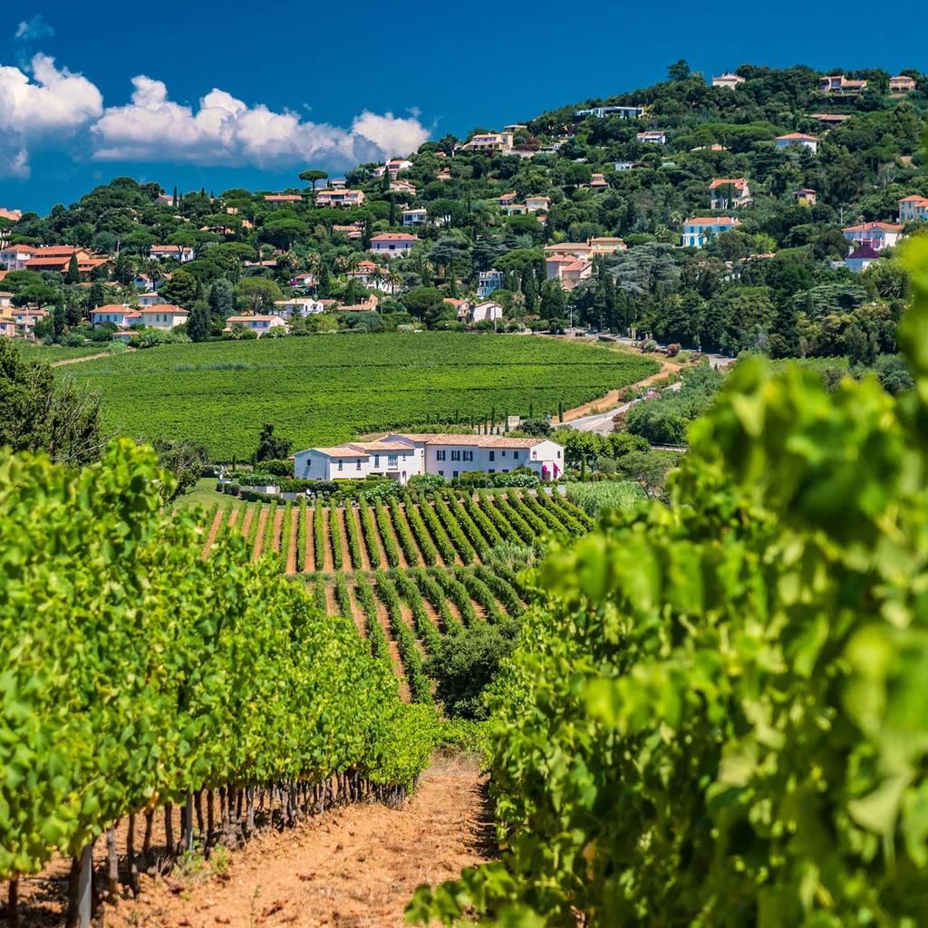 - Golfe de Saint Tropez Wine Tour 1/2day