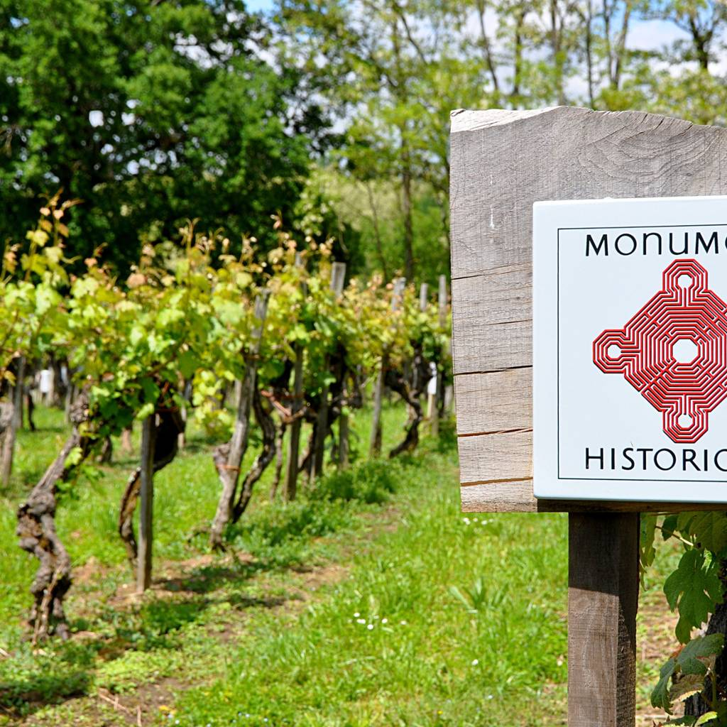 A vineyard listed in the Historic Monuments