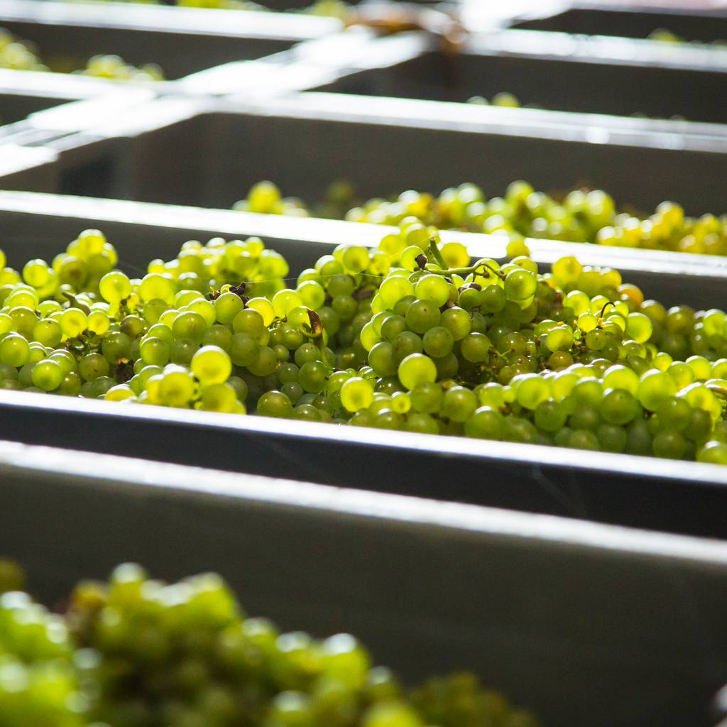 - Become a winegrower for a day