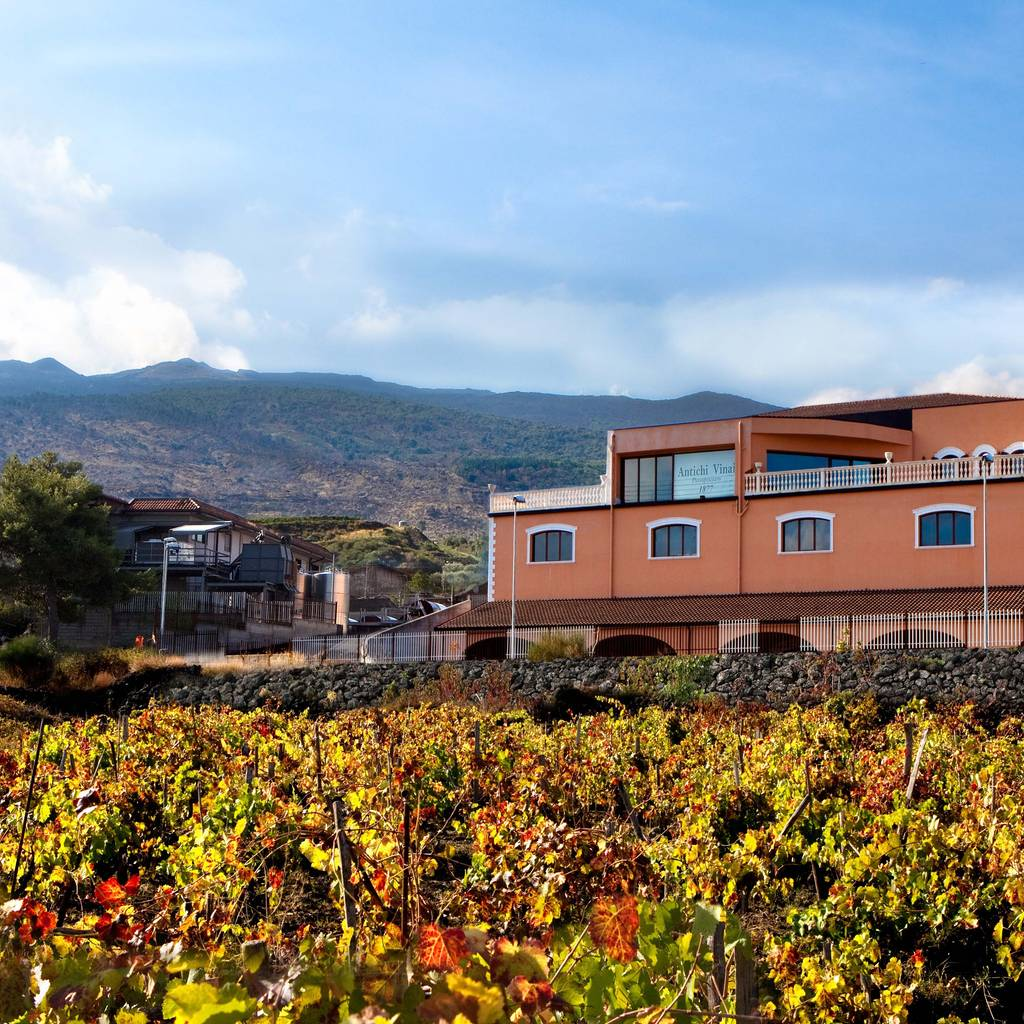 - Etna experience: visit and tasting