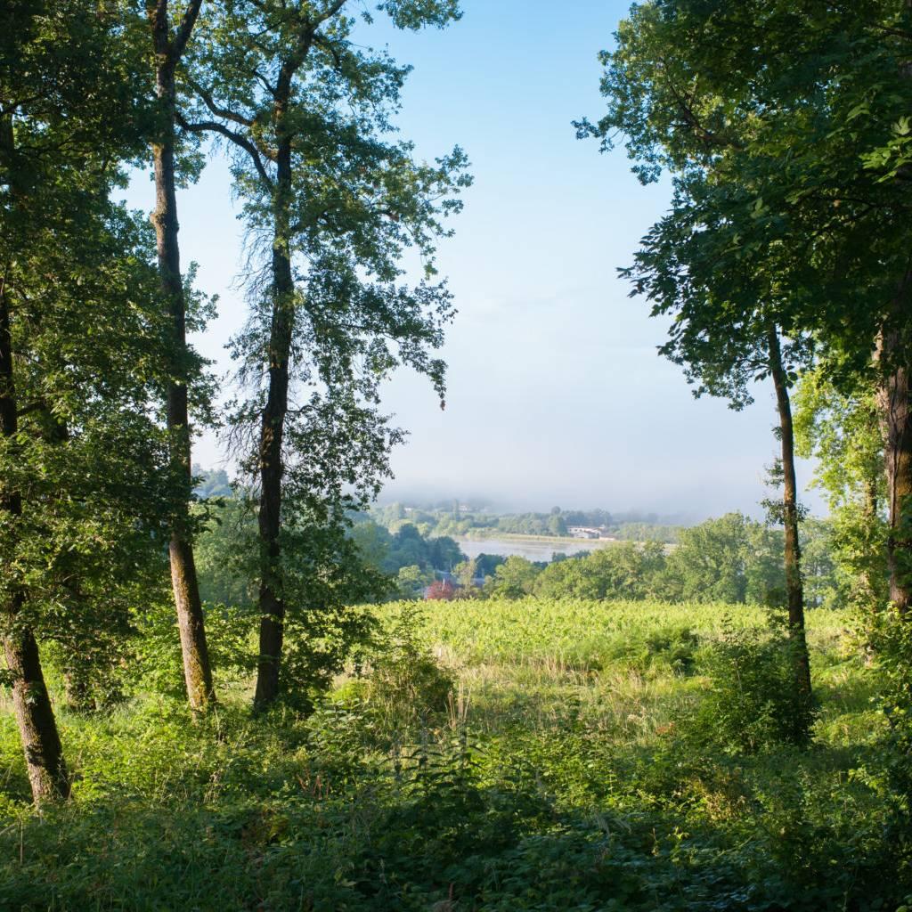 - Paseo entre bosque, viñedo y río
