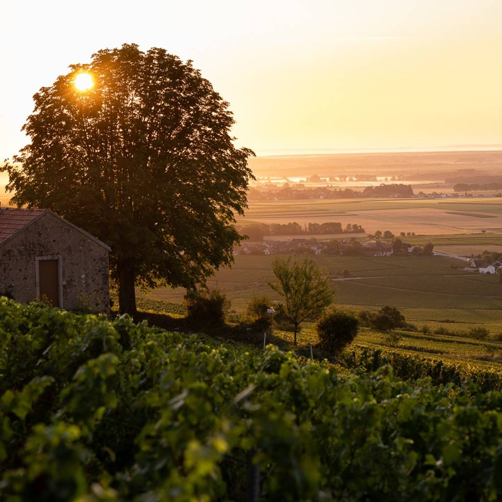 - The opportunity to live a total experience… To experience Burgundy and the 'Geo-Sensorial' tasting.