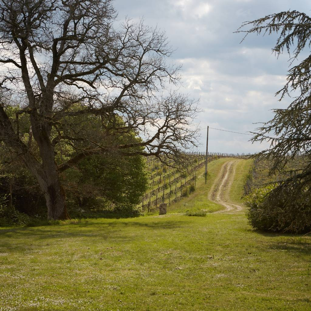 Discovering the Domaine d'Arton